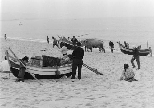 autres-photos-anciennes-boeufs-plages-nazare-portugal-3712579608-935622.jpg